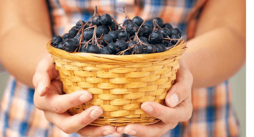 Ce spun clienții noștri despre beneficiile fructelor aronia