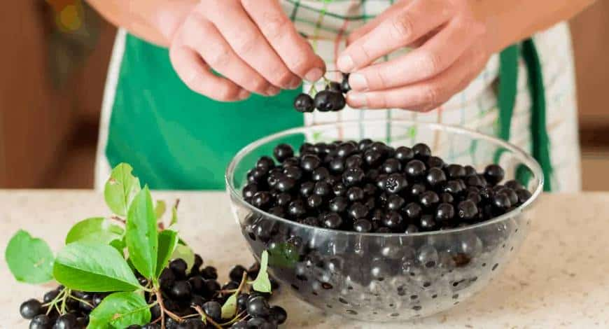 Ce spun 10 doctori renumiți despre fructele de aronia