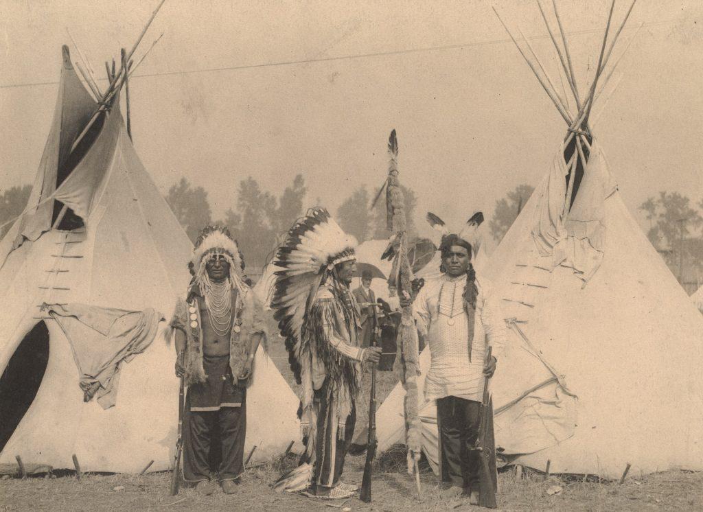 aronia a fost cultivată și consumată prima dată de nativii americani